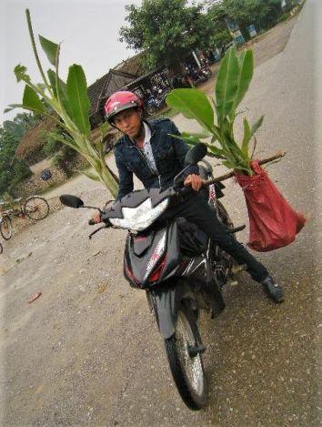 Transportando plantas