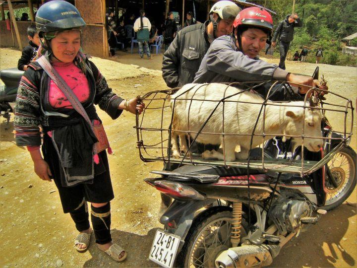 Transporte bovino