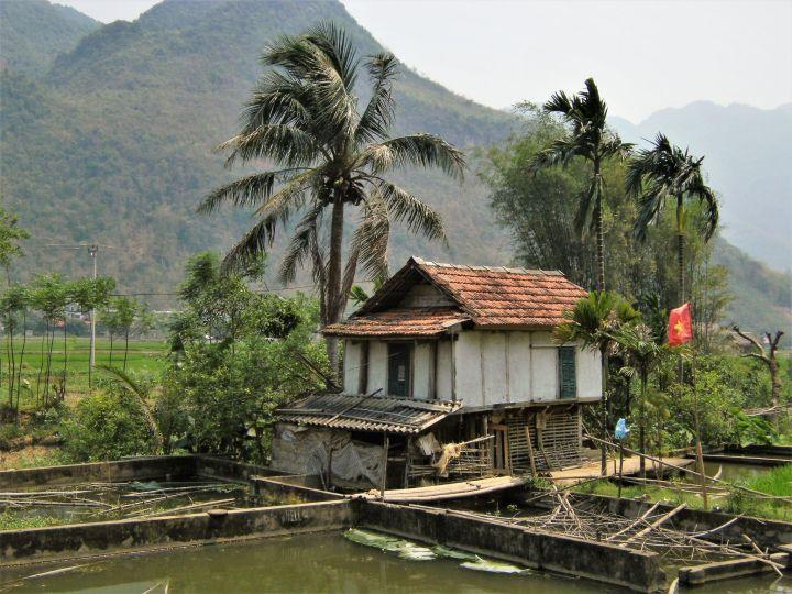 Campos de arroz en Mai Chau, Vietnam