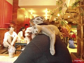 Cats at a cat cafe