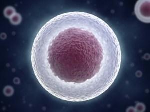 Stem_Cell