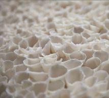 Coral detail