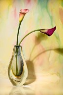 Glass Vase with Calla Lilies