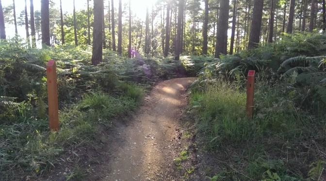 RED MTB Trail, Swinley Forest