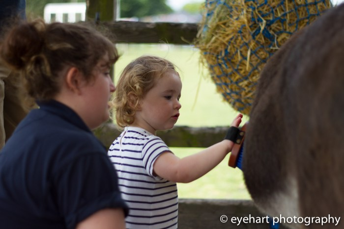 Donkey Spring Fair 2016-40