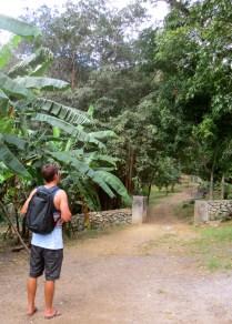 Ryan surveys the forest area