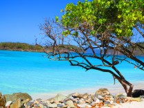 Picture perfect much!?! - Cinnamon Bay, St John, U.S.Virgin Islands