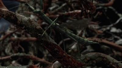 PAns_Thorns_01