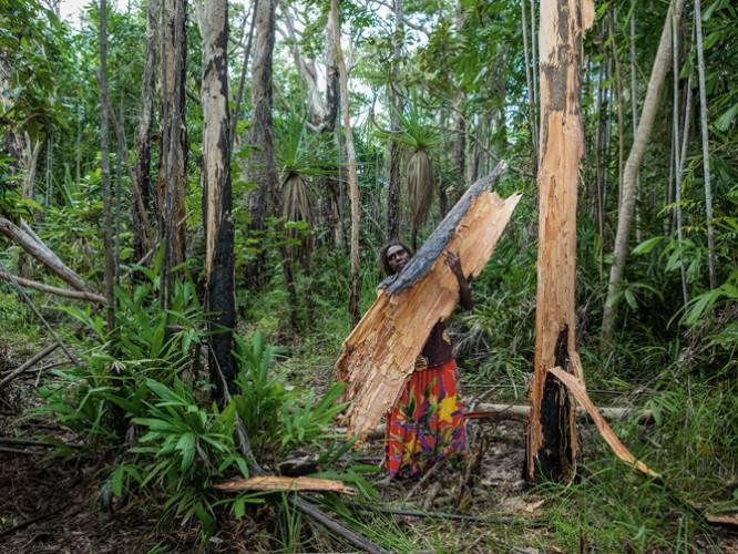 02-paperbark-tree-arnhem-land-670