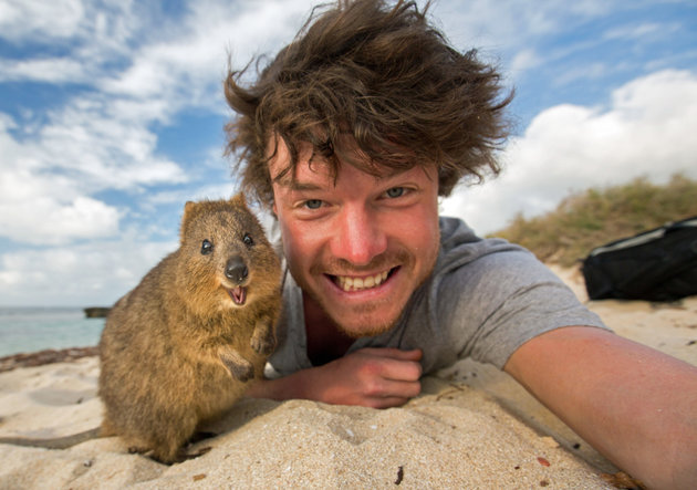 PIC BY @DAXON / CATERS NEWS - (PICTURED: Allan Dixon takes selfie with quokka) This real-life Dr. Dolittle walks with the animals, talks with the animals, and... TAKES SELFIES with them. Traveller Allan Dixon has amassed a hilarious collection of shots with a variety of exotic creatures. Included in the 29-year-olds collection are smiling snaps with the likes of kangaroos, quokkas, camels and sea lions. In some of the shots, Allan, who is originally from Wicklow, Ireland, can even be seen in festive poses, placing a Santa hat on himself or his furry friends. - SEE CATERS COPY