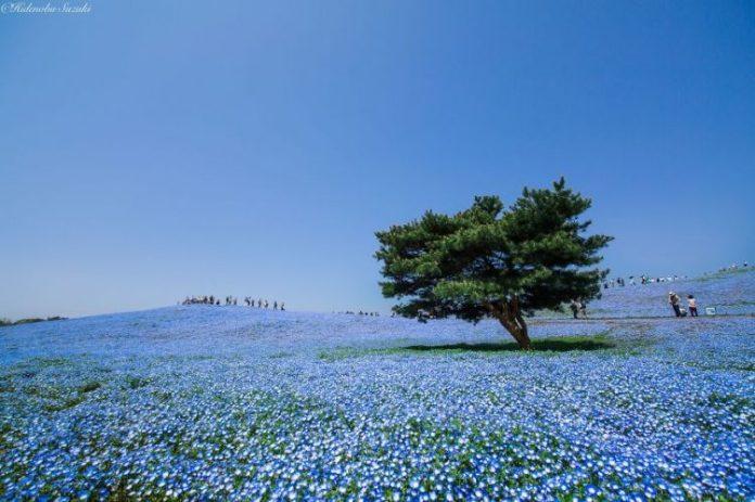 amazing-places-japan-11-1-57512c3e9627a__880
