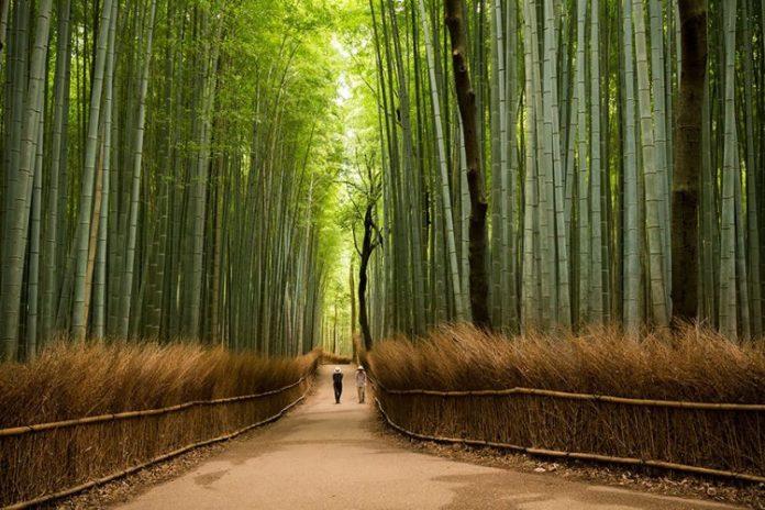 amazing-places-japan-20-57512c52c845a__880