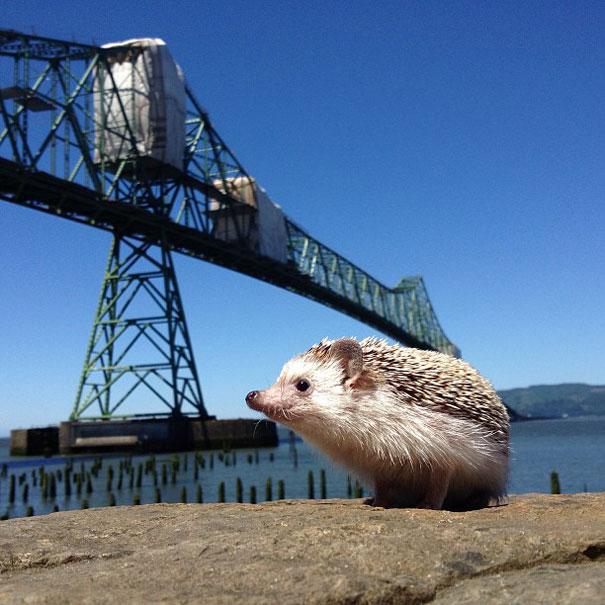 biddy-cute-hedgehog-adventures-27
