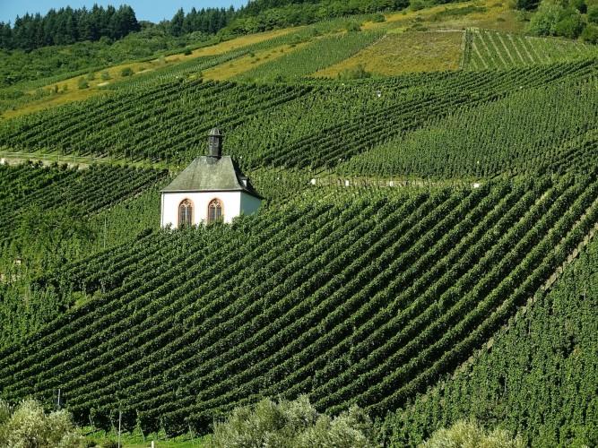 vineyard-973569_1920