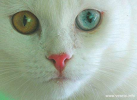 green and blue cat eyes