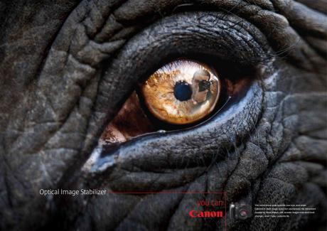 dark elephant eye