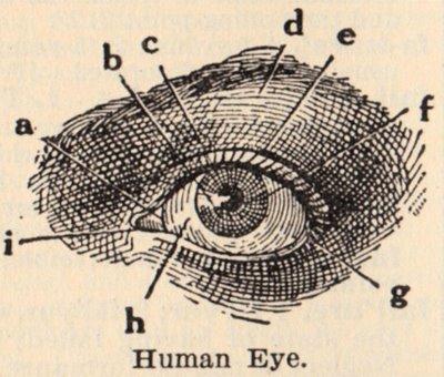 classic human eye anatomy drawing