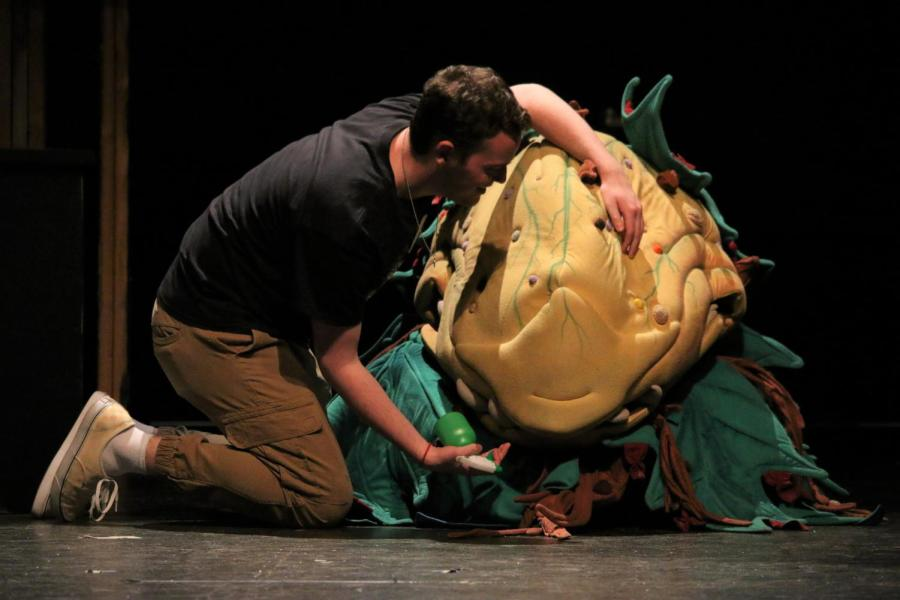 Douglas Pomin rehearses as Seymour with Audrey II in RHSTCos latest production, Little Shop Of Horrors.