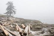 Beach with fog and drift logs.