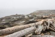 Driftwood on a sandstone beach, in the fog