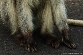 furry fingers