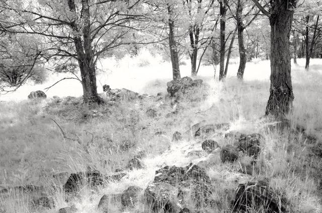 Bianca Romanella Alberi Opera presente nella mostra personale Oltre il Visibile, 2016 Copia n° 1/20 Tiratura: 20 copie Stampa fotografica realizzata in Camera Oscura da file digitali in formato 20x30 su carta baritata ILFORD