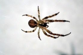 Random spider