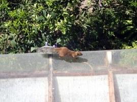 Squirrel!!