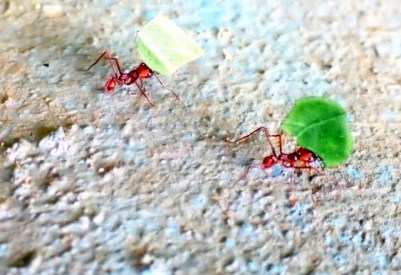 Leaves and ants