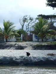 Tiny the Dog in front of the house