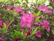flowers EZ
