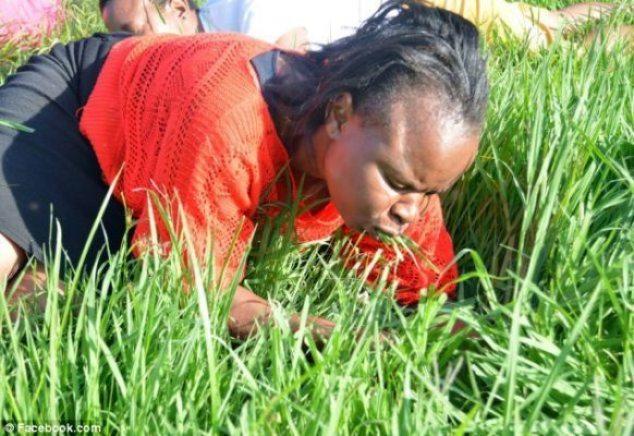 grasseater1