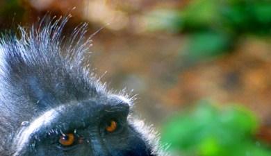Gorilla eyes....scary, right?