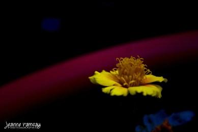 Primary petals