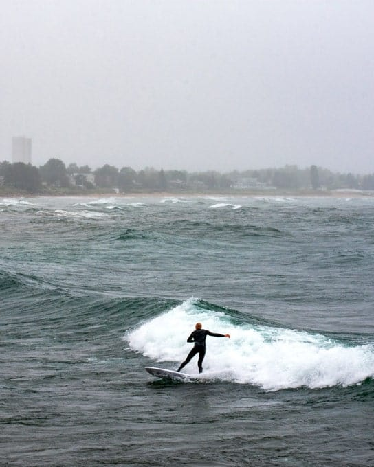 surfzoo-min
