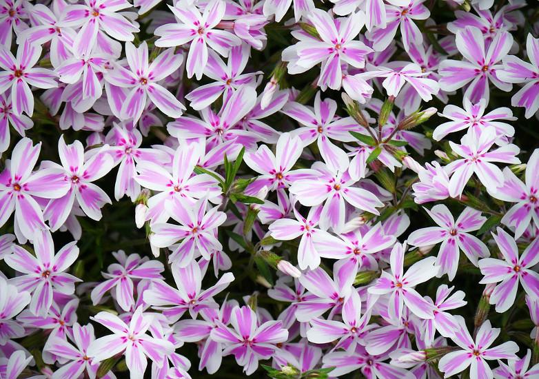Czimeth István: Bach-virágterápia másképpen (2. rész)