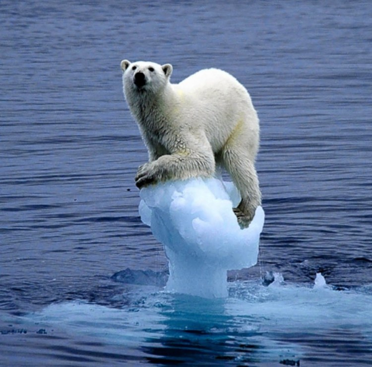 polar-bear-on-melting-ice