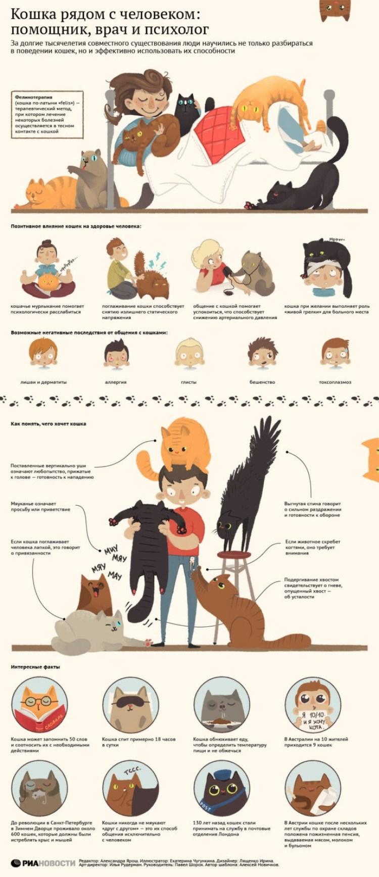 Кошка рядом с человеком. Любовь кошек людям