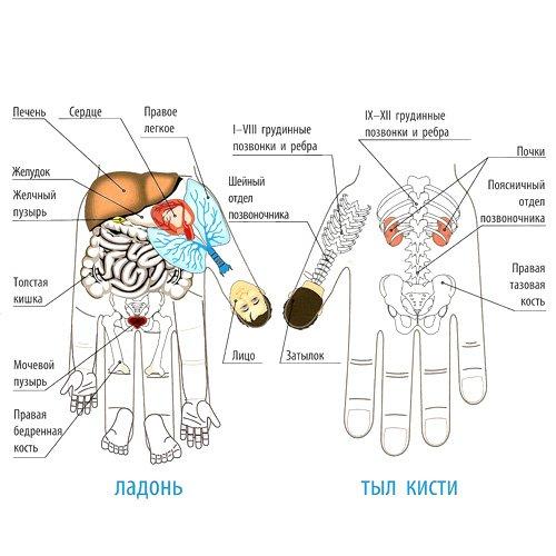 Точки СУ ДЖОК восточная медицина. Обзор практик
