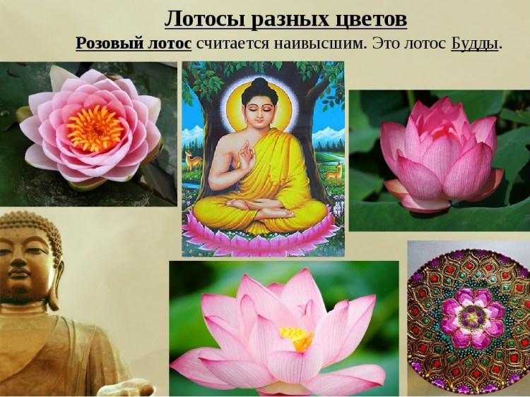 Что означает лотос в буддизме