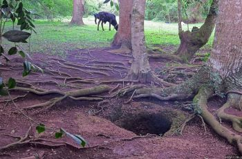 Норы смерти Валумбе в Уганде. 200 вертикальных отверстий