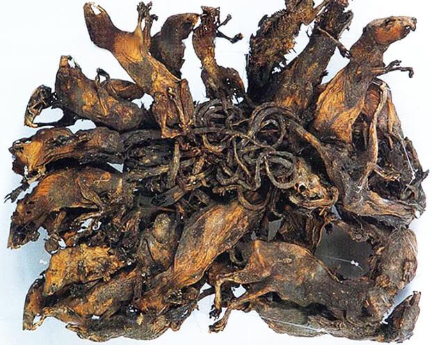 мумия крысиного короля