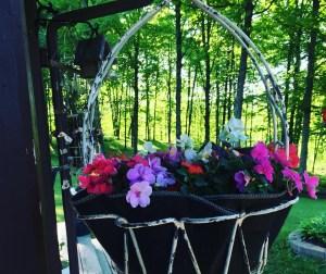 Alternative Coco Liner Hanging Basket