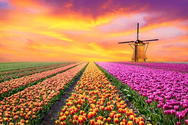 hot_Holland_1