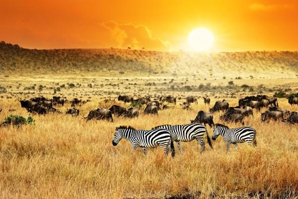 kenya-shutterstock_296968166