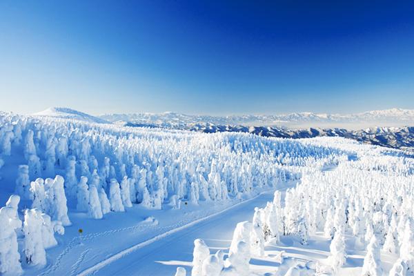 5 藏王樹冰