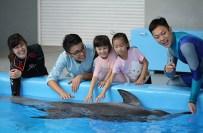 約會海豚.jpg