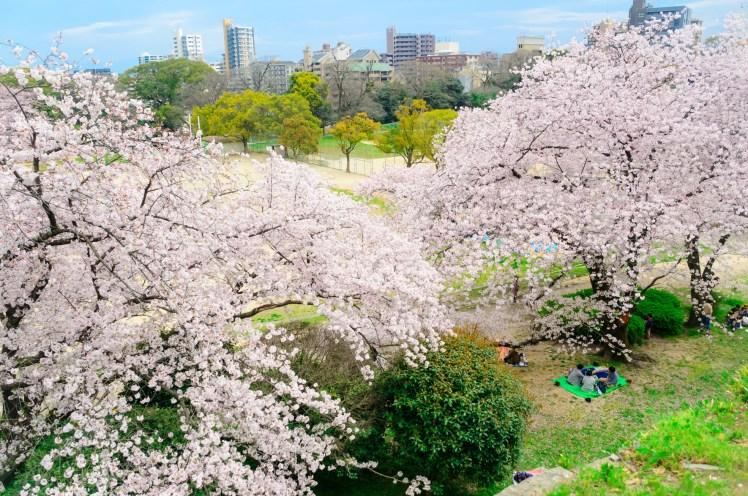 福岡舞鶴公園.jpg