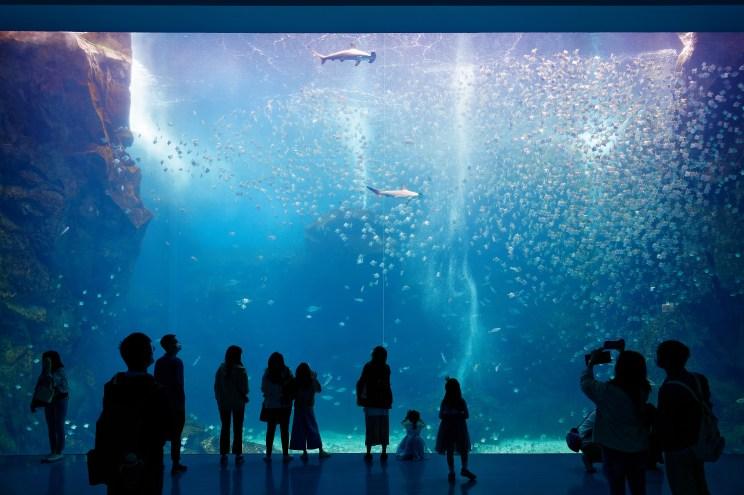 Gazing,Through,The,Giant,Glass,Panel,Of,Xpark,Aquarium,,In