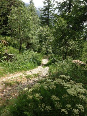 UTCAM - Vallée de la Gordelasque